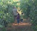 """Приглашаем Вас на экскурсию по ферме """"Белл-Офри - винодельня Эйн-Нашот"""""""