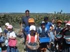 בציר ענבים בבקעת הנדיב